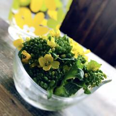 アデリア/レトログラス/レトロ/菜の花/キッチン雑貨/雑貨/... まだまだ寒いですが こごみ、ふきのとう、…