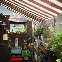 多肉のある暮らし/多肉植物/DIY/フェンスガーデン/ジャンクガーデン/ガーデニング/... おはようございます。  本格的な夏がやっ…