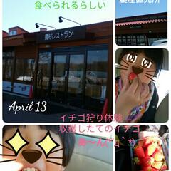イチゴ狩り体験/円山動物園/くるるの杜/春のフォト投稿キャンペーン/おでかけワンショット ちょっと早めのGW前にお出かけ 4/13…