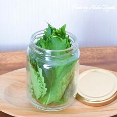 食材長持ち/長持ち冷蔵保存法/大葉/青じそ/青じそ保存法/大葉保存法/... 青じそ(大葉)の長持ち冷蔵保存法です。 …
