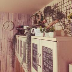 カインズホーム/ガーデンフェンス/フェイクグリーン/DIY/雑貨/100均/... テレビの棚の上に好きな物をごちゃごちゃ置…
