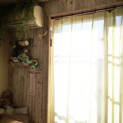 板壁/壁紙屋本舗/フェイクグリーン/いなざうるす屋/DIY/雑貨/... 今日は良いお天気でお部屋の中も心地よい暖…