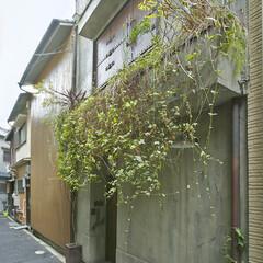 緑/植栽/玄関 建物の外観 グリーンの棚が迎え入れてくれ…