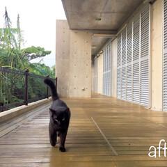 台風/台風対策/雨戸/我が家/台風通過後/黒猫 台風時にうーんと頼りになる「雨戸」 大切…(1枚目)