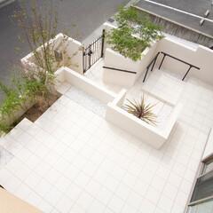 ESTINA/エスティナ/ガーデン/外構/エクステリア/庭/... 敷地の高低差を緩やかにするために、迷路の…