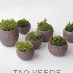 苔/植木鉢/グリーンインテリア/陶器 水を吸い上げる特殊な機能を持った信楽焼で…