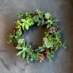 春のフォト投稿キャンペーン/令和の一枚/フォロー大歓迎/LIMIAファンクラブ/ハンドメイド/DIY/... 100均の金ザルをリメイクして 多肉植物…