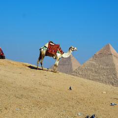エジプト/海外旅行/旅行/ラクダ/ピラミッド/アフリカ/... 初めてエジプトに行ってきました。エジプト…