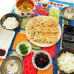 料理/夜ごはん/餃子/ドイツ/アンナのキッチン/わたしのごはん ドイツで作る夜ごはん♪ ★キャベツたっぷ…(1枚目)