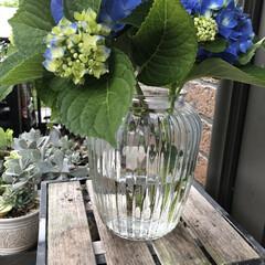 あじさい/花のある暮らし/季節インテリア/梅雨/玄関あるある/雑貨/... 昨日お客様のお庭で、切っていただいた紫陽…(4枚目)