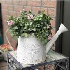 花のある暮らし/雑貨/暮らし/玄関あるある 先月の写真…  数年前に購入のブリキ?の…