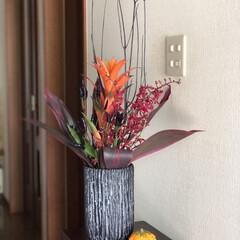 ハロウィン/雰囲気/ハロウィンぽく/花のある暮らし/100均deハロウィン お花生け替え✨ 10月と言うことで黒・赤…