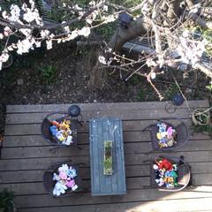 庭/diy201604/DIY/エクステリア 杏の季節の写真です☀ ウッドデッキと机は…