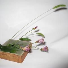 花器/フラワーベース 【水に暮らす】  リビングを彩る、小さな…