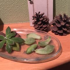 ガーデニング植物