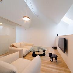 建築/住まい/建築デザイン/シンプル住宅/注文住宅 犬と暮らす家 でもあります OUCHI-…