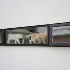 建築/住まい/建築デザイン/シンプル住宅/注文住宅 スリット窓を楽しむ猫たち OUCHI-19