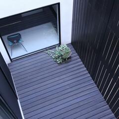 建築/住まい/建築デザイン/注文住宅/シンプル住宅/中庭 中庭見下ろし 外の道路から視線を切ったプ…