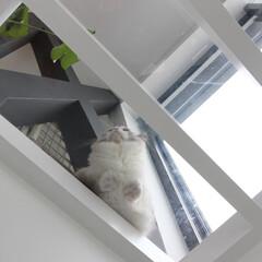 建築/住まい/建築デザイン/猫と住む家/猫と暮らす家 透明床の上の猫 OUCHI-44  肉球…