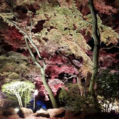 風景 近所のお寺の紅葉🍁夜ヴァージョン(1枚目)