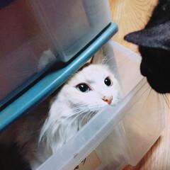 ペット 今度は3段箱の中。 ルウははいれないよ〜…(1枚目)