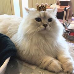 ビーズ/モール/手作り/猫の王冠/猫の被り物/100均/...