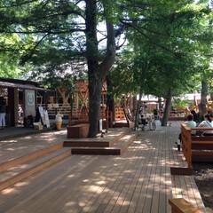 「山中湖  「ハンモックカフェ」  木々に…」(1枚目)