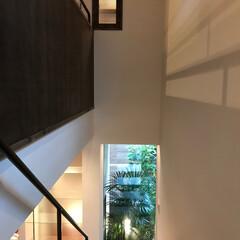 建築家と建てる家/新築戸建て/住まい/階段/時を記録する家/坪庭 「坂道の家」川和の住まい 小さな坪庭を持…