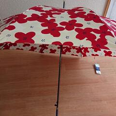 女子は好き/可愛い/北欧風の傘/傘が壊れました/お嫁さんごめんね🙇♀️💦💦/フォロー大歓迎/... こんにちは~💖💖 今日はあいにくのお天気…