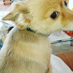 ポメックス/犬好きな人と繋がりたい/犬と暮らす/おばあちゃん/甘えん坊/フォロー大歓迎/... おはようございます! 昨日褒めて頂いたの…