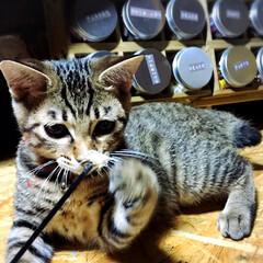 猫/癒し/Instagramも見てね/LIMIAペット同好会/にゃんこ同好会 みなさまこんばんは🐼🐾 我が家のニャンの…