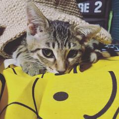 麻紐/癒し/猫/Instagramも見てね/ig←Panda.factory/100均/... 我が家のニャンに限らず、ニャンは麻紐が大…