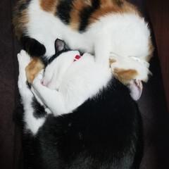 猫/うちの子ベストショット なかよしシンクロ