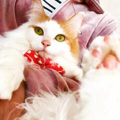 保護ねこ/多肉植物/LIMIAペット同好会/ペット仲間募集/猫/にゃんこ同好会/... なぜか、とーしゃんに抱っこされると 固ま…