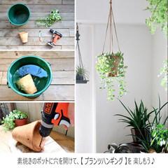 インテリア/インテリアグリーン/プランツハンガー/プランツハンギング/電動工具/観葉植物 グリーンの愛で方も色々♡ ハンギングする…