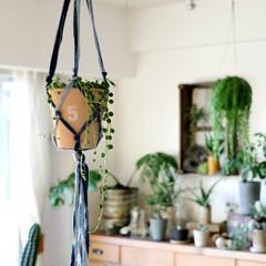 インテリアグリーン/プランツハンギング/プランツハンガー/グリーンネックレス/多肉植物/観葉植物/... 濃い色と薄い色の2色のデニム生地で 作っ…