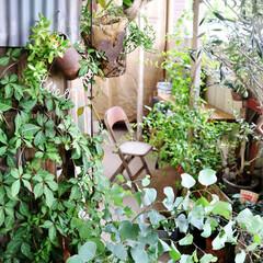 庭/ベランダガーデン/ベランダ/ガーデン/DIY 今日から9月。 猛烈な残暑も そろそろ落…