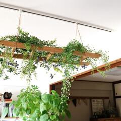 インテリアグリーン/インテリア雑貨/ラダー/グリーン/フェイクグリーン/グリーンアレンジ/... ラダーを天井から吊るして それをグリーン…