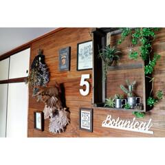 ドライフラワー/セルフリノベーション/DIY/足場板/和室DIY/ダリアボックス/... DIYで和室の壁に 足場板を貼ったトコロ…
