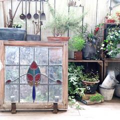 ベランダガーデン/ステンドグラス/ガーデン/庭/ベランダ/マンション暮らし/... ステンドグラス 。。。 素敵でしょ♪笑 …
