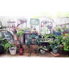 ガーデン/ガーデニング/キャベツボックス/みどりの雑貨屋/ベランダガーデン/ベランダガーデニング/...  我が家のベランダガーデン! ちょっと変…
