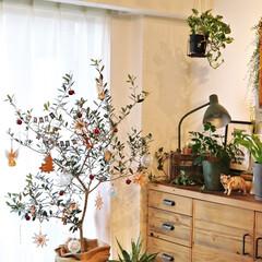 オリーブの木/ジンジャークッキー/ガーランド/雪のオブジェ/ワイヤークラフト 我が家のクリスマスツリーは、オリーブの木…