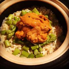 ウニご飯/ウニ/土鍋ご飯/土鍋
