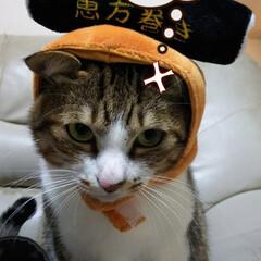 節分/保護猫/スリコ/フォロー大歓迎/猫/にゃんこ同好会 4コマ漫画的な感じにしてみました(笑)🤭…