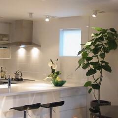 キッチン/オリジナルキッチン/建築家/建築家とつくる家 品川の家 コの字型のオリジナルキッチン。…