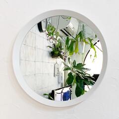 丸鏡/ラウンドミラー/雑貨/インテリア/イケア/住まい IKEAの丸い鏡はお気に入りで、鏡の中に…