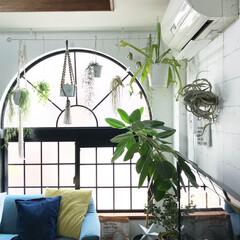 植物と暮らす/カーテンレール/植物/ボタニカル/DIY/雑貨/... 夏の日差しになって、少し逆光気味の写真で…