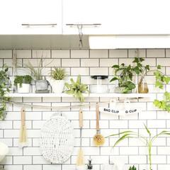 ボトルブラシ/キッチンブラシ/マーナ/レデッカー/フェイクグリーン/植物/... キッチンのシンク上の写真です(^^)/ …