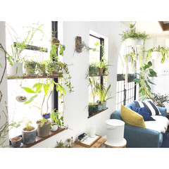 植物のある暮らし/植物/フェイクグリーン/観葉植物/グリーン/DIY/... 窓際に沢山のグリーンを飾っています♡ 沢…