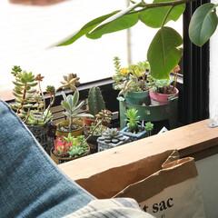 グリーンのある暮らし/多肉植物/植物のある暮らし/植物/グリーン ソファ越しからの窓外の眺め(^^) 少し…